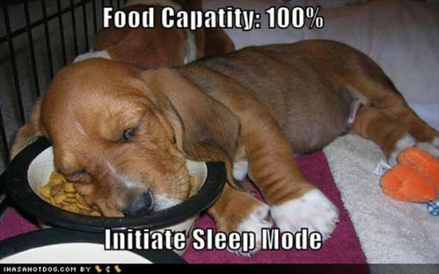 funny dogs sleeping anywhere (3)