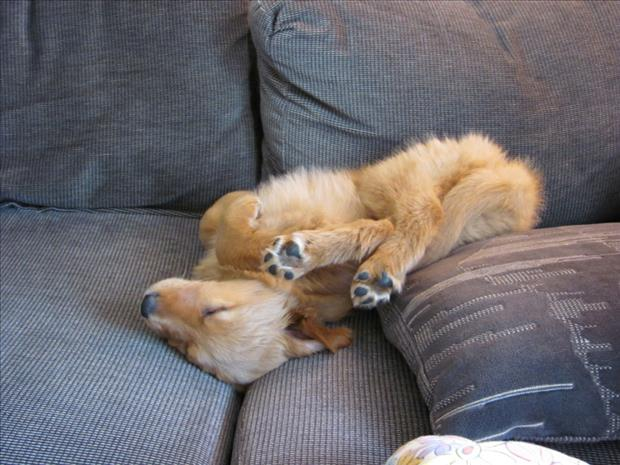 funny dogs sleeping anywhere (34)