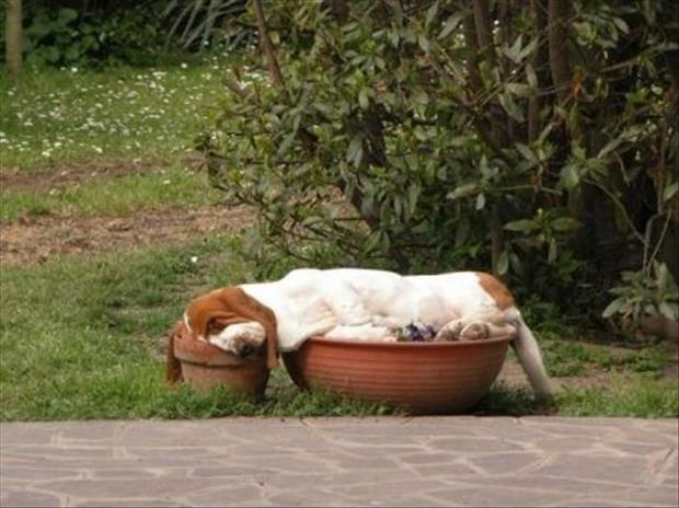 funny dogs sleeping anywhere (5)