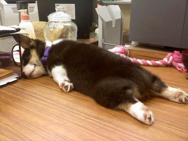 funny dogs sleeping anywhere (6)