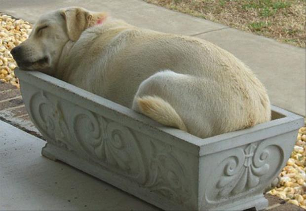 funny dogs sleeping anywhere (8)