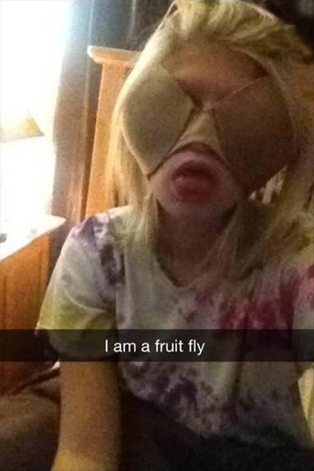 funny fruit flies