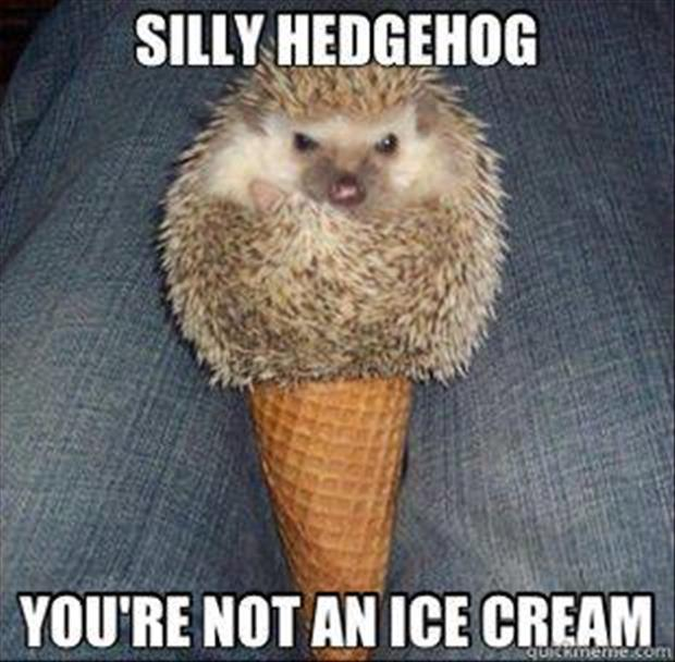 funny hedge hogs