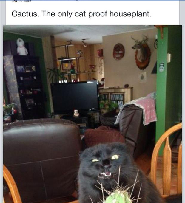 funny house plants