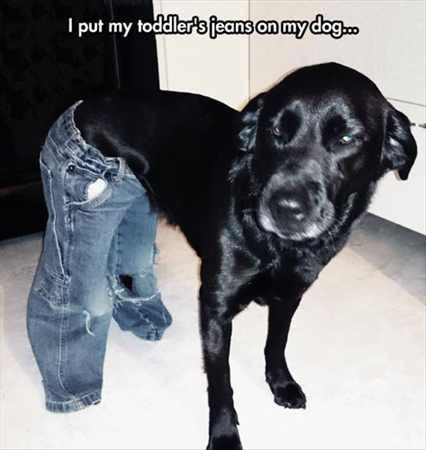 funny pants on dogs