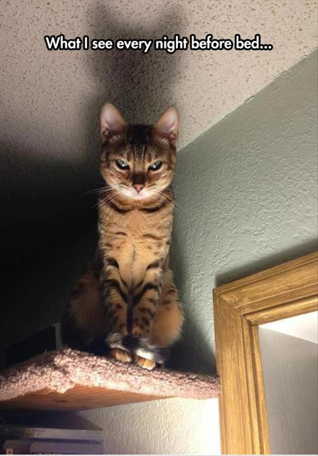 funny scary cat