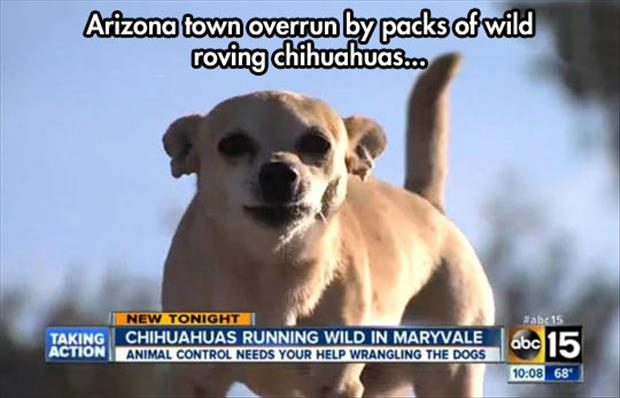 funny town overrun by dogs