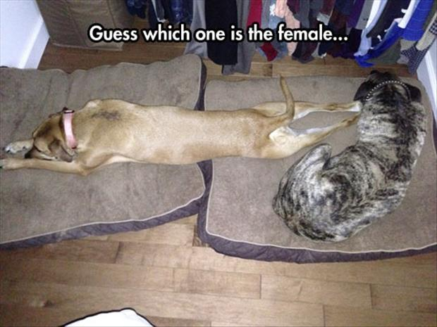 guess which one is female