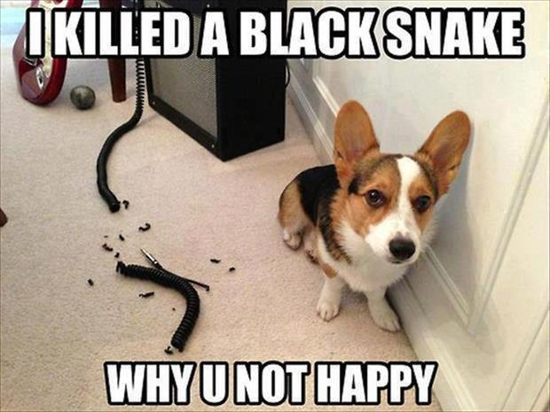 how to kill a snake funny dog