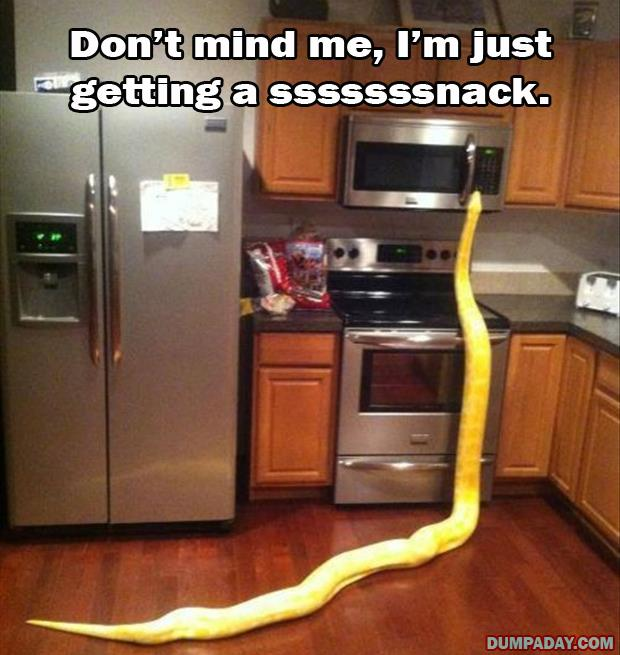 huge snake in my kitchen