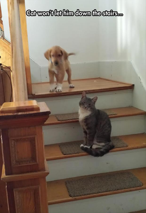 mean cat won't let him go down the stairs