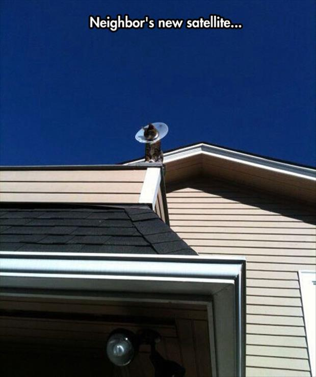 neighbors new satelite dish