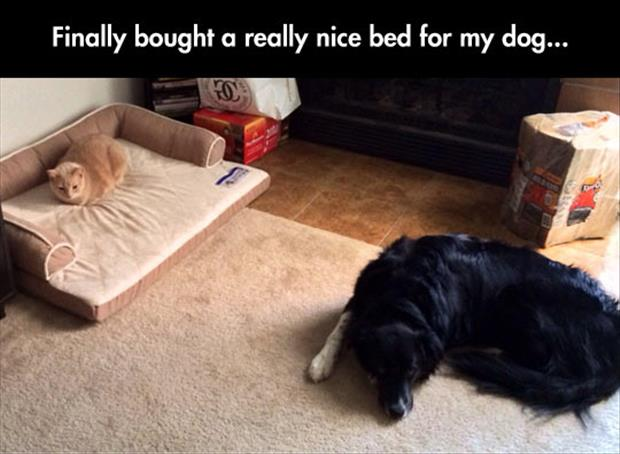 nice bed for the dog