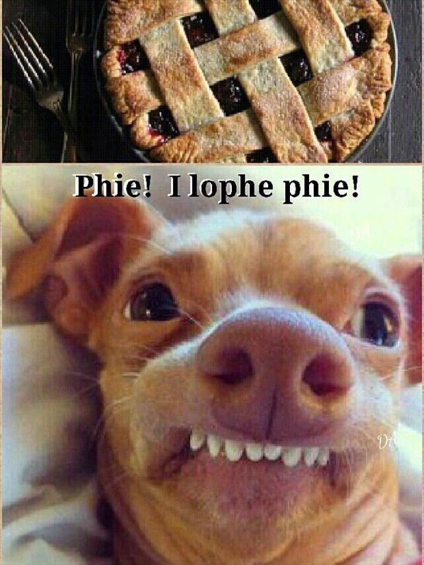 phteven meme 6 tuna (phteven) is the funniest dog on the internet 20 pics,Chiwawa Meme