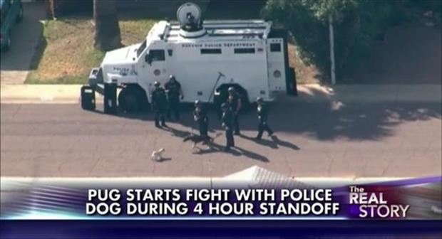 pug starts a fight with the police dog