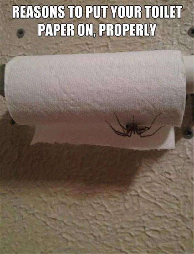 reasons to put your toilet paper on correctly