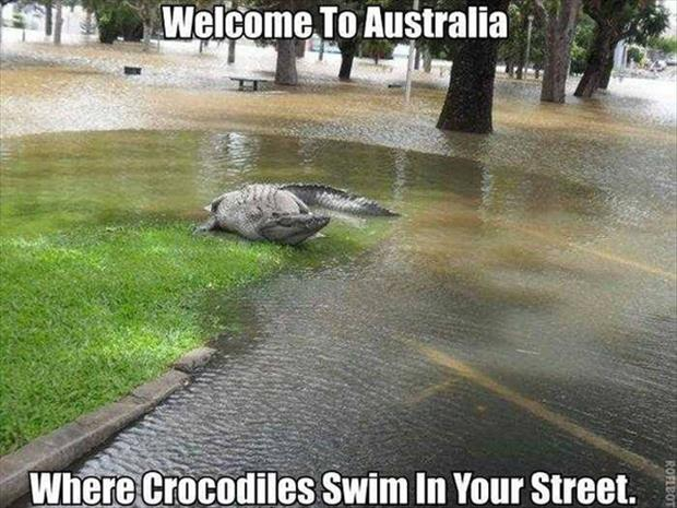 scary things in Australia (16)