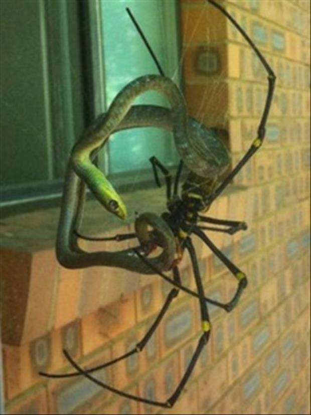 scary things in Australia (2)
