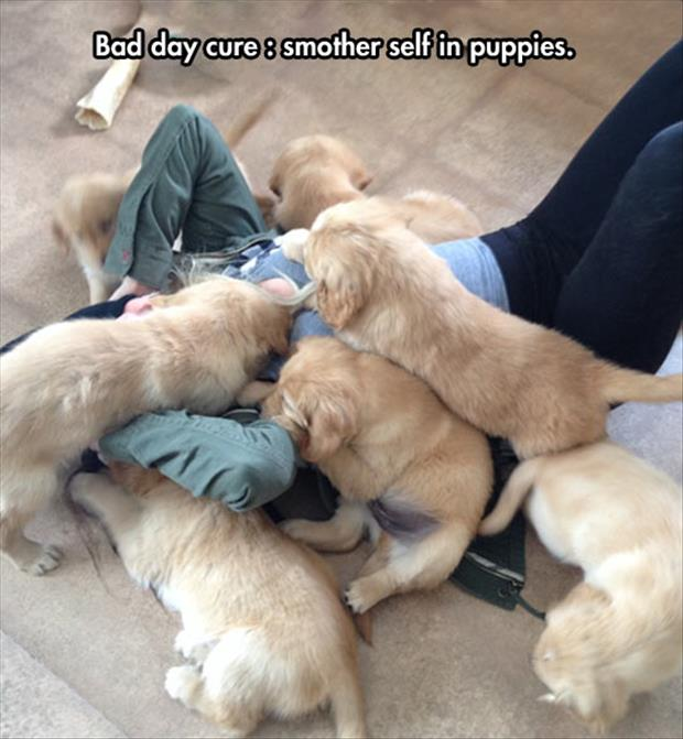 smother self in puppies