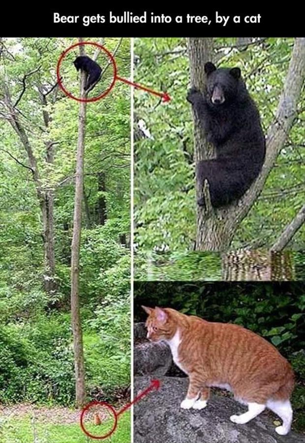 the bear is afraid of the cat