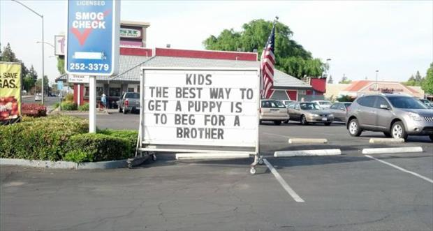 the best way to get a puppy