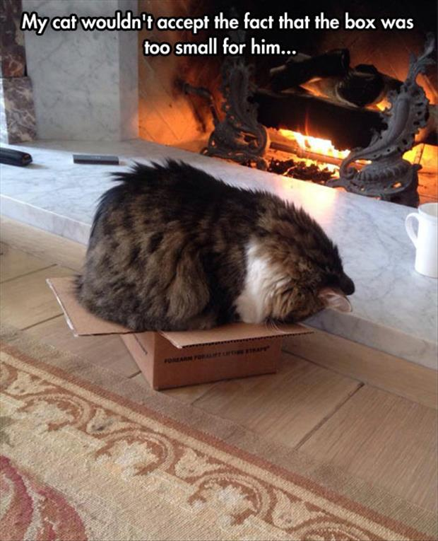 the box is to small for the cat but he sits anyway