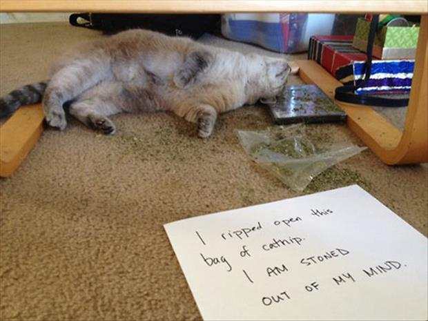 the cat needs an intervention