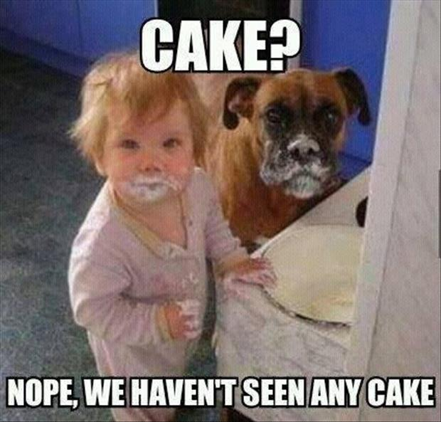 the dog and baby eat the cake
