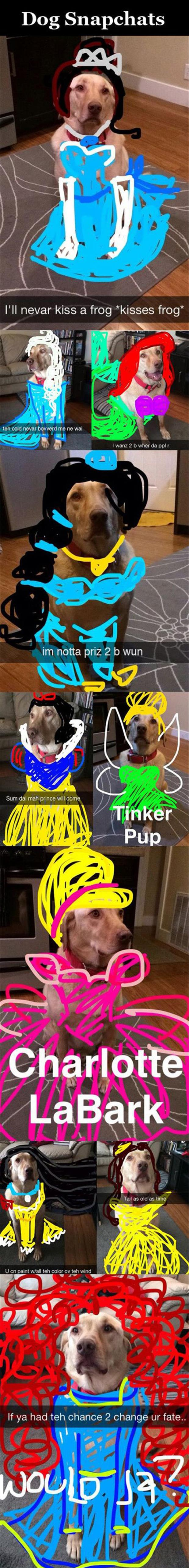 the dog snapchats
