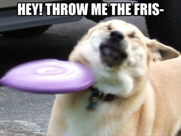 throw me the frisbe