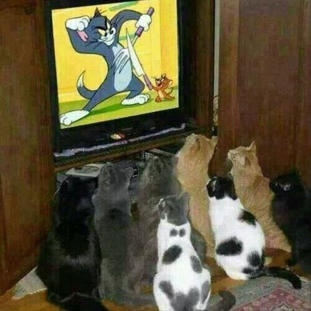 tom and jerry funny pictures