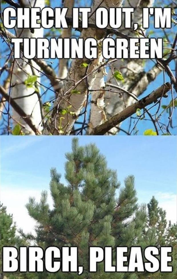 trees turning green