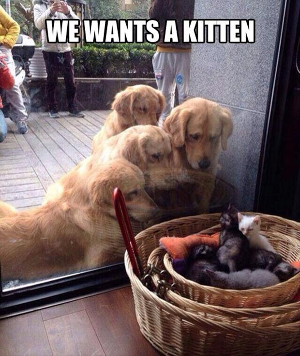 we want kittens
