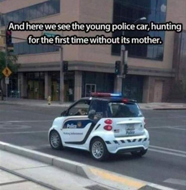 young police car
