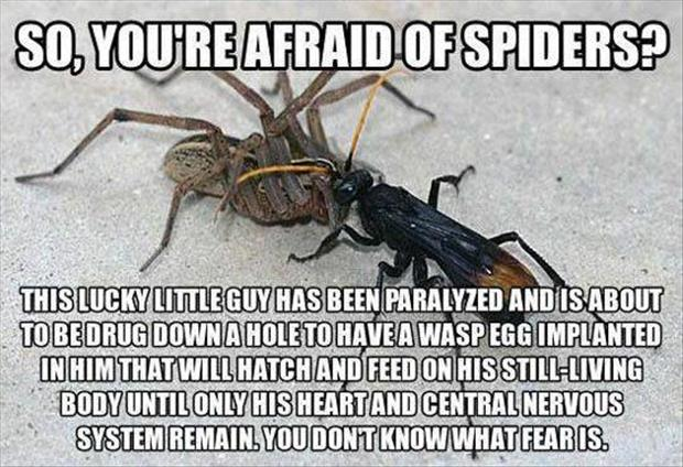 you're afraid of spiders