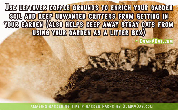 DumpADay Garden Hacks- Coffee grounds fertilizer