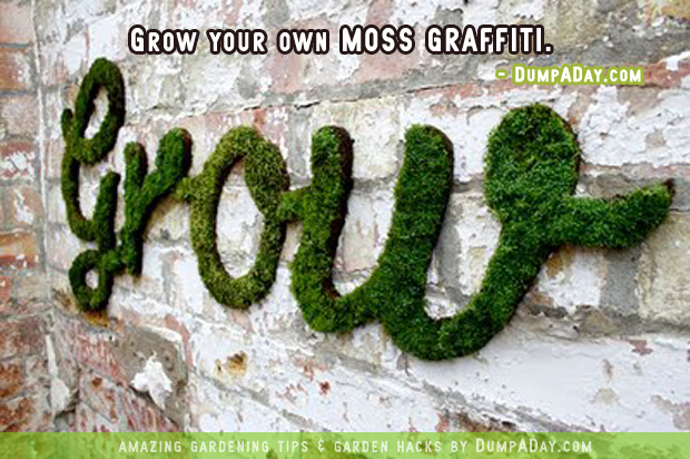 DumpADay Garden Hacks- Moss graffiti