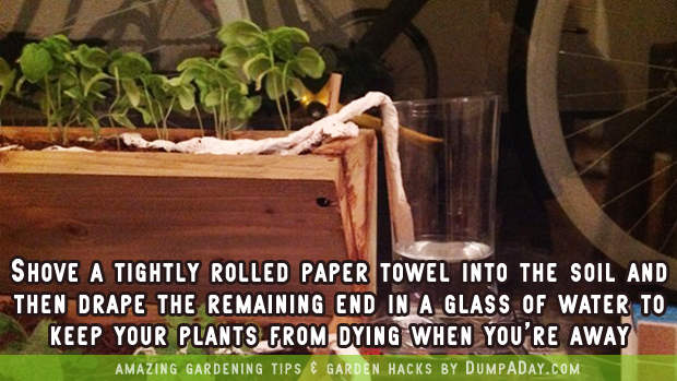 DumpADay Garden Hacks- Paper towel trick
