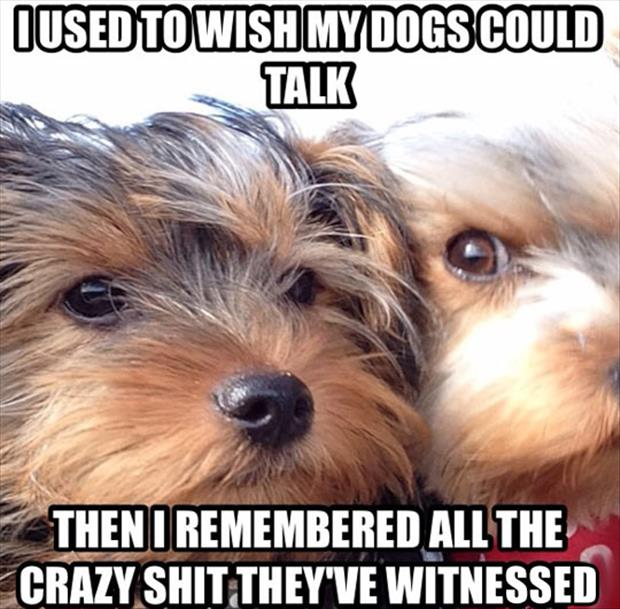 I wish dogs could talk