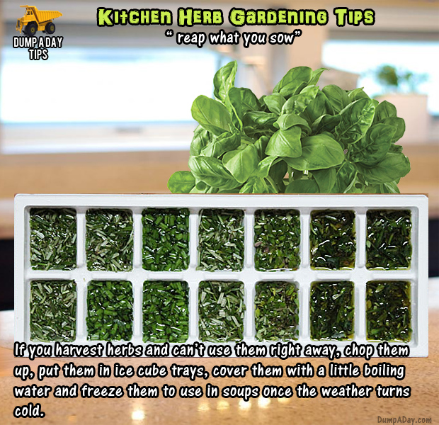 Kitchen Herb Garden Tips Harvest And Freeze Herbs