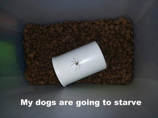 a dog is going to starve