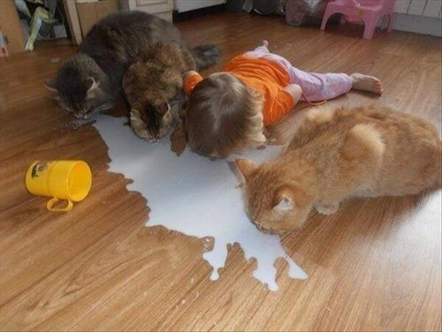 baby and cats love milk