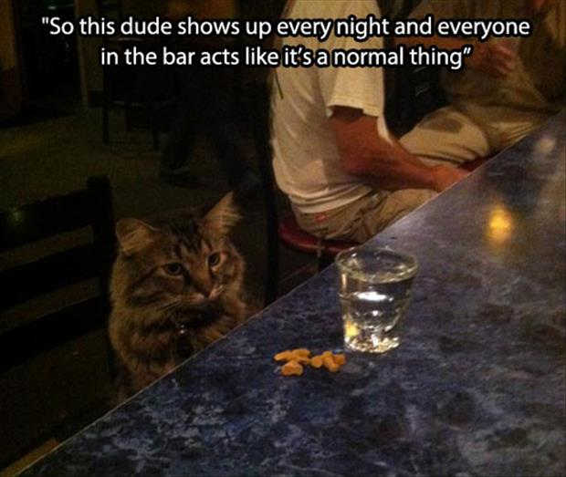 cat in the bar