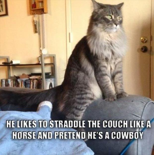 cat straddles the couch