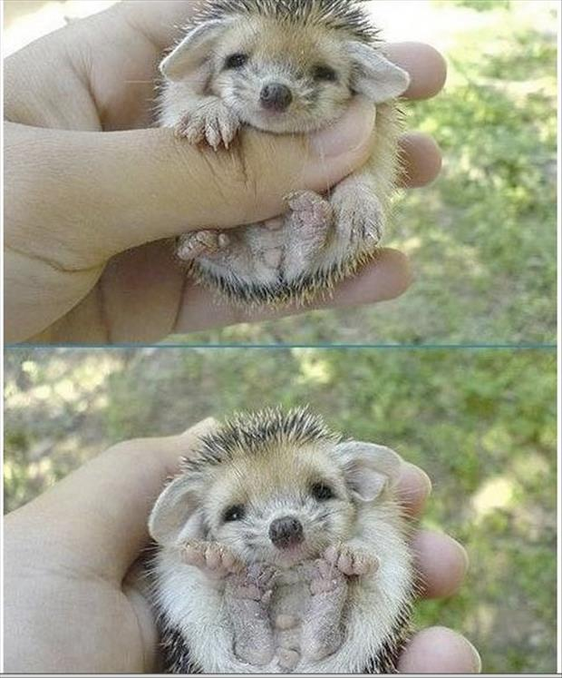cutest animals ever (11)