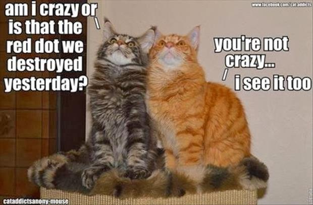 funny animal pictures (1)