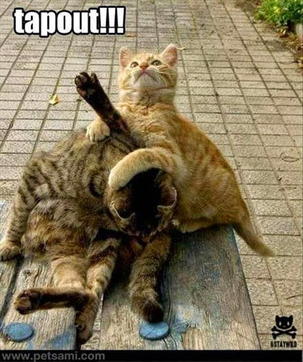 funny animal pictures (29)