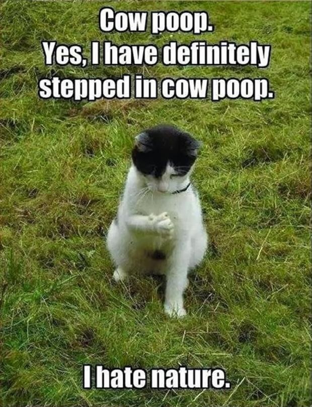 funny animal pictures (4)