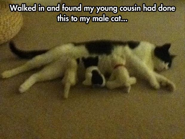 funny daddy cat