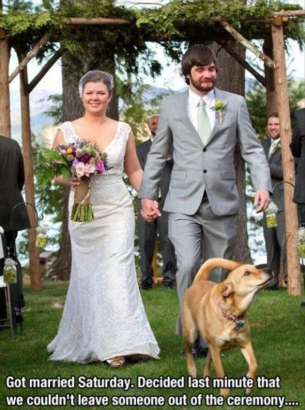 funny dog in wedding